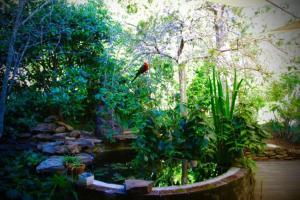 A garden outside Moments Mountain Retreat