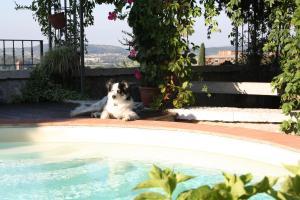 Huisdier of huisdieren van gasten bij B&B POGGIO CAIAR
