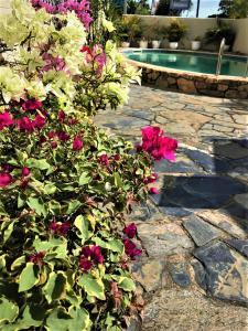 A garden outside Cairns Motor Inn