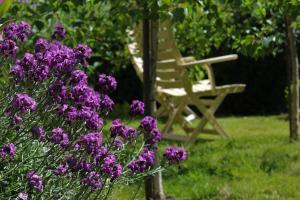 A garden outside Cream Cottage