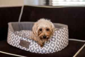 Pet or pets staying with guests at Iberostar 70 Park Avenue