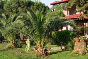 Κήπος έξω από το House Evristhenis 2