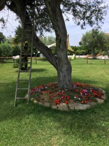 Giardino di Villa Liberti