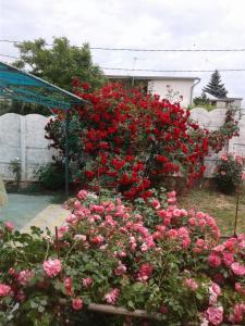A garden outside Holiday Home Vityazevo