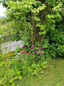 A garden outside La Petite Campagne
