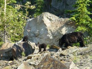 Tiere im Chalet oder in der Nähe