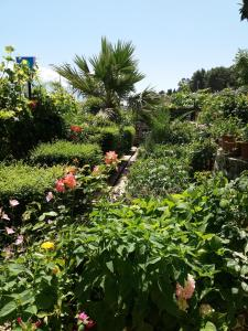A garden outside Qiqi Hotel