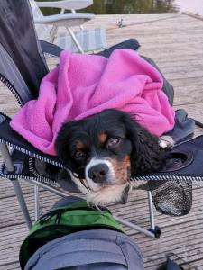 Haustiere von Gästen der Unterkunft Ferienhäuser Pannier I und II