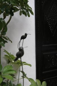 Animals at the riad or nearby