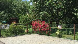 Ogród w obiekcie Apartments Sanok