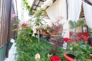 A garden outside Vila Sandra