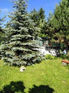 A garden outside Homestay on Lugovaja