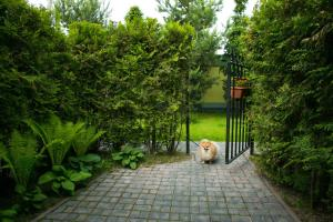 Сад в Мотель Сытый Ежик