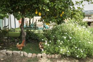 A garden outside Sa Fita Backpackers - Albergue Juvenil