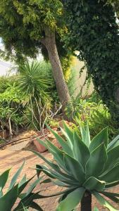 A garden outside Armadale Cottage Bed & Breakfast