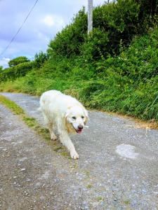 Pet or pets staying with guests at Seafield Farmhouse