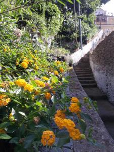 Giardino di Casa Clotide