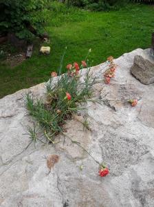 A garden outside Casa da Vinha Velha