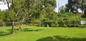 A garden outside Ngomongo