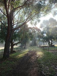 A garden outside Carinya Park
