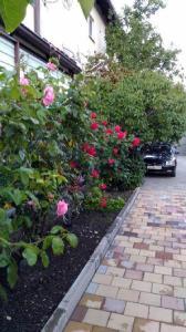 Сад в Гостевой дом Камелия