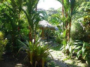 A garden outside Cabinas Lunatica