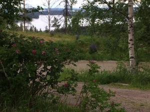 En trädgård utanför Riihivuoren Lomakylä