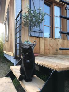 Animal ou animaux domestique(s) séjournant avec des clients dans l'établissement Maison & Tartine