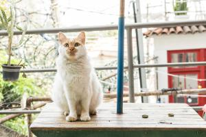 Pet or pets staying with guests at Mambembe Hostel