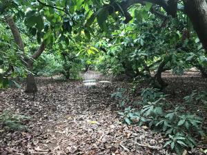 Сад в Finca El Vergel Rural