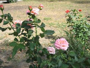"""A garden outside """"Визит"""""""