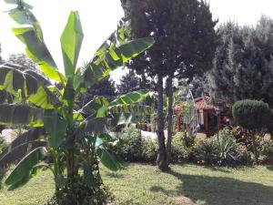 A garden outside Palatinus Apartmanok