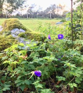 Een tuin van Kilcoy Chalets