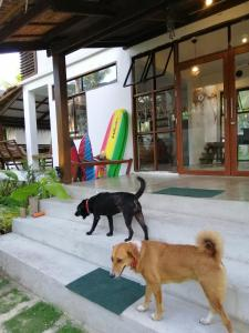 Pet or pets staying with guests at Secret Spot Siargao