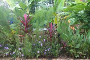 A garden outside Yanick's Angkor Cottage