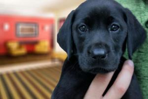 Pet or pets staying with guests at Extended Stay America - Cleveland - Middleburg Heights