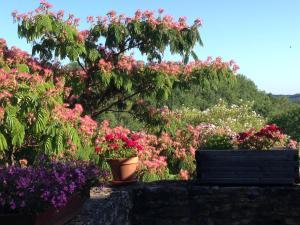 A garden outside Domaine du Fraysse