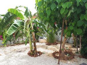 A garden outside Villa neuve La Somone