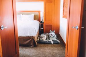 Pet or pets staying with guests at Pan Pacific Whistler Village Centre
