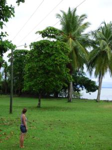 A garden outside Corcovado Beach Lodge
