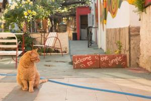 Huéspedes con una o varias mascotas en Guest House Mielaloe
