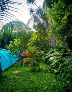 Um jardim em Tié Itaguá Hostel