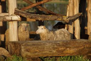 Animals at the farm stay or nearby