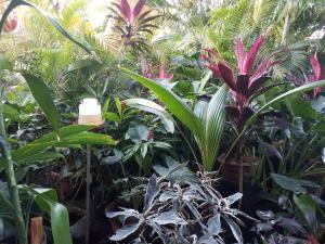 A garden outside Bocas Condos Rentals