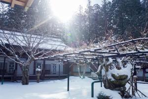 Sojiin in de winter