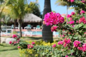 Um jardim em Aruba Eagle beach home