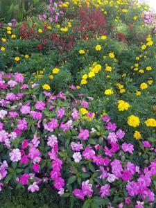 Ein Garten an der Unterkunft Sunny Studio for Two!