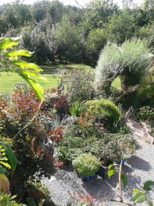 A garden outside Larkside Cottage