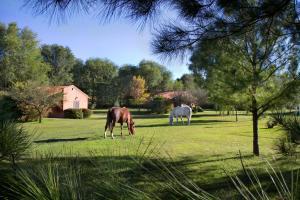 Animales en el resort o alrededores