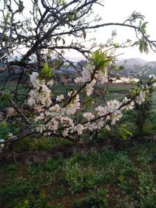 Vườn quanh Vhouse Moc Chau